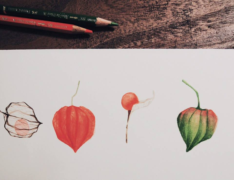 許許兒x兒童島合作奇幻植物園手繪印花布手稿