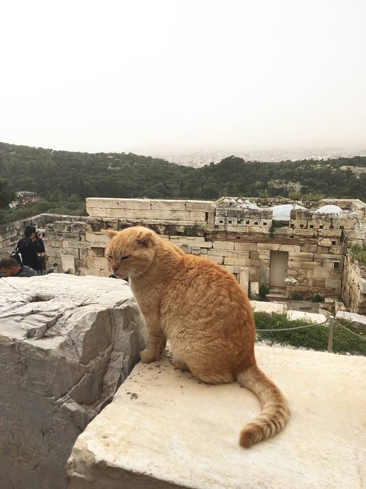 希臘古城-充滿貓的城市